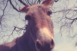 Donkey looking into the camera. Fun!