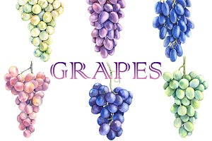 Watercolor Grape Bunches Set