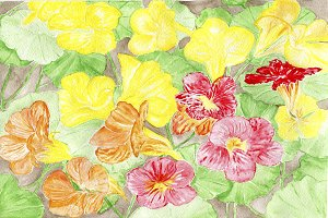Nasturtium Watercolour Pattern