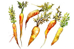Orange carrot PNG watercolor set