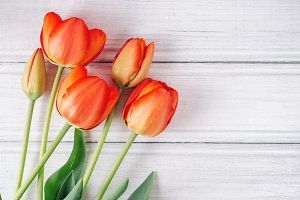 Red tulips on white wooden table wit