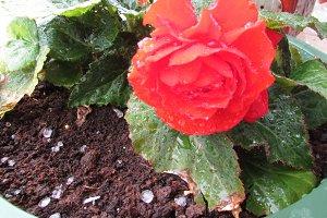 Hail in flower pot