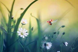 божья коровка летит над цветами