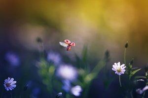 божья коровка летит над цветущим луг