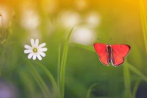 бабочка сидит на весеннем лугу