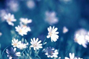 нежные цветы на весеннем лугу