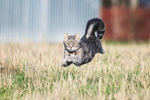 кот ловко прыгает на лугу