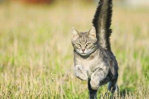 кот весело бежит по лугу