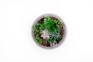 Flat Lay Succulents in Terrarium