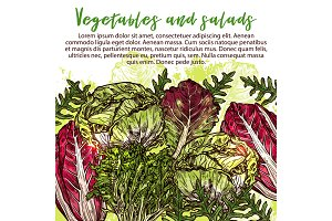 Vector sketch poster of salads vegetables