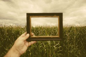 Corn plants framed with a frame