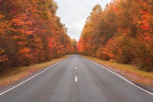 autumn road . beautiful bright autum