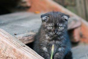 kitten sitting on the porch
