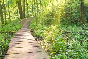 Bridge in the sunny green forest