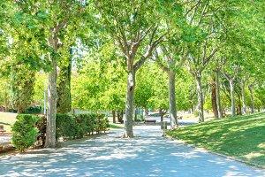 Green sunny park
