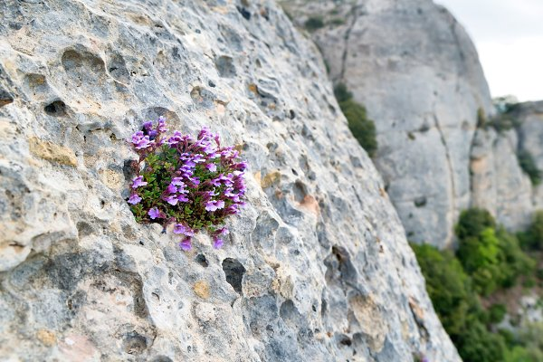 Small violet flowers grow on rock