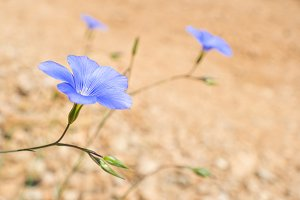 Blue flowers on the soft yellow sand