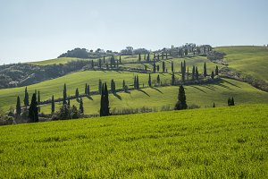 La Foce cypress road