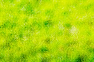 Out of focus bokeh grass background