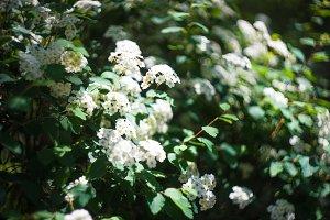 Blooming spring park