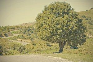 oak beside road