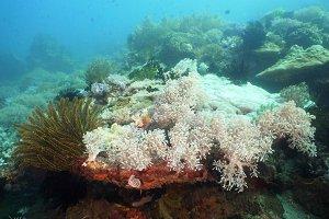 Coral reef. Philippines, Mindoro.