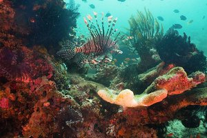 Coral reef and tropical fish. Philippines, Mindoro