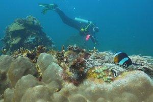 Scuba Diver underwater. Philippines, Mindoro.