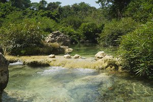 River in the rainforest.