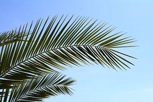 Palm leaves. Tropical leaf