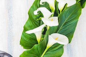 Floral card concept with calla lilly