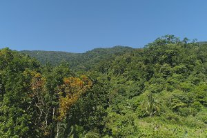 View of mountain landscape with rainforest.