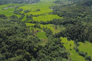 Landscape with rice terrace field Philippines, Luzon.