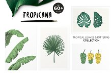 TROPICANA: tropical leaves&patterns