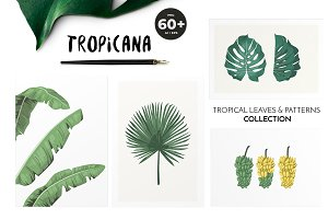 TROPICANA: tropical leaves patterns