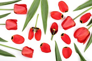 red tulips isolated on white background. Top view. Flat lay pattern