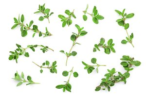 Fresh thyme spice isolated on white background. Top view. Flat lay pattern