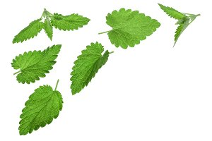 Melissa leaf or lemon balm isolated on white background with copy space for your text. Top view. Flat lay pattern