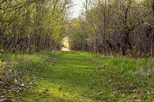 Glendalough Trail