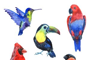 Exotic birds watercolor icons