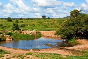 Pond of clear water in bush, Africa