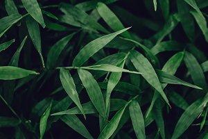 Closeup of green tropical plants