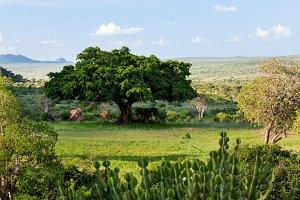 Lush savanna, bush landscape, Africa