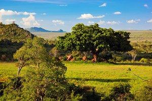 Grassland with rich flora, Africa