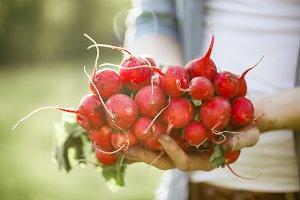 Gardener holding fresh harvest