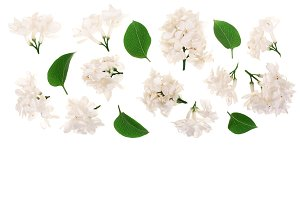 light lilac flowers, branches and leaves isolated on white background with copy space for your text. Flat lay. Top view