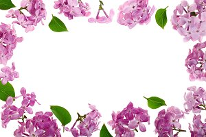 frame with lilac flowers and leaves isolated on white background with copy space for your text. Flat lay. Top view