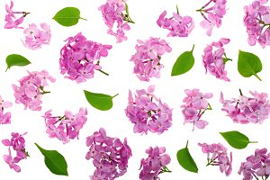 lilac flowers, branches and leaves isolated on white background. Flat lay. Top view