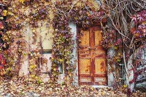 Old doors overgrown with vines