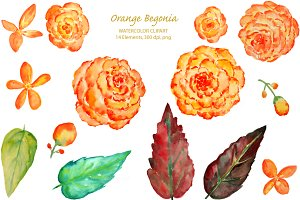 Watercolor Orange Begonia